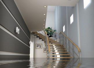 Élimination des moisissures après les dégâts d'eau